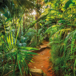 Komar Photo Mural Jungle Trail 368x254 cm